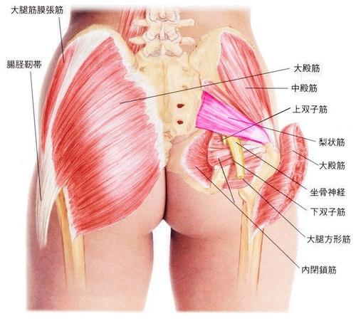 上田市でお尻の痛みでお悩みなら当院へ | 整体 腰痛