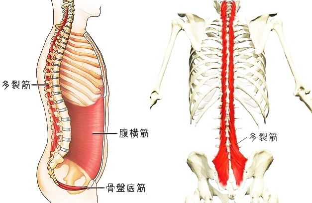 腰痛の本当の原因と根本から治すたった2つの体操【上田市・整体】
