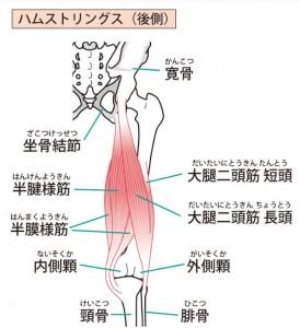 ハムストリングス 膝裏の痛み